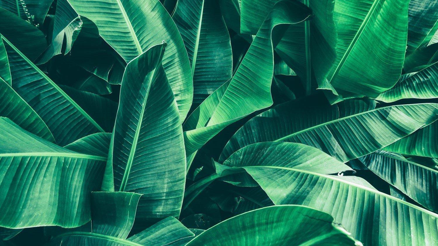 Love the nature – Alles im grünen Bereich?